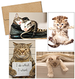 Kitty Thoughts Multi-pack note card set 20CT